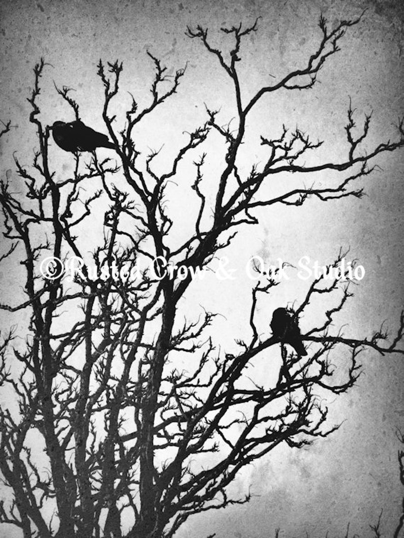 Rustic Crow Black Bird Modern Country Mordern Cottage Art Matted Picture A491