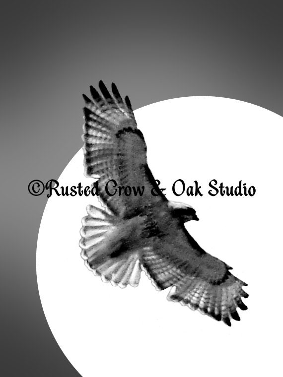 Contemporary Black White Hawk Bird Sun Flight Home Decor