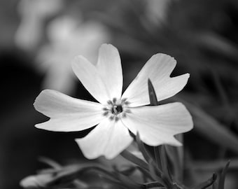 Macro Flower - black and white photo, flower photography, flower, garden, nature
