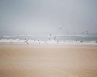 Beach Seagulls Photography Print - Rockaway Beach, Queens, NY