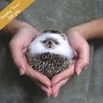 """PDF Hedgehog  """"lump"""" This is PDF files!!!"""