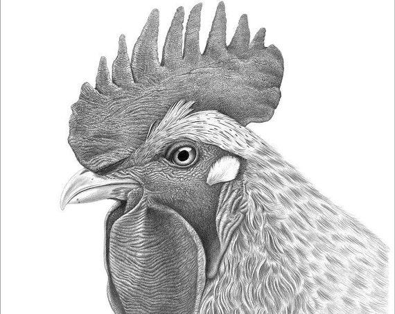 "Cornelius the Rooster 12"" x 16"" Giclee"