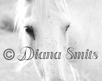 White Beauty Horse Photo, Digital Download, Fine Art, Nature Photography, Animal Photography, Black White Photography
