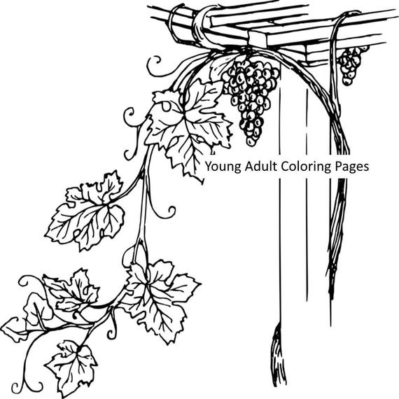 plants coloring page figure 12 grape 2 printable coloring etsy Gin Grape image
