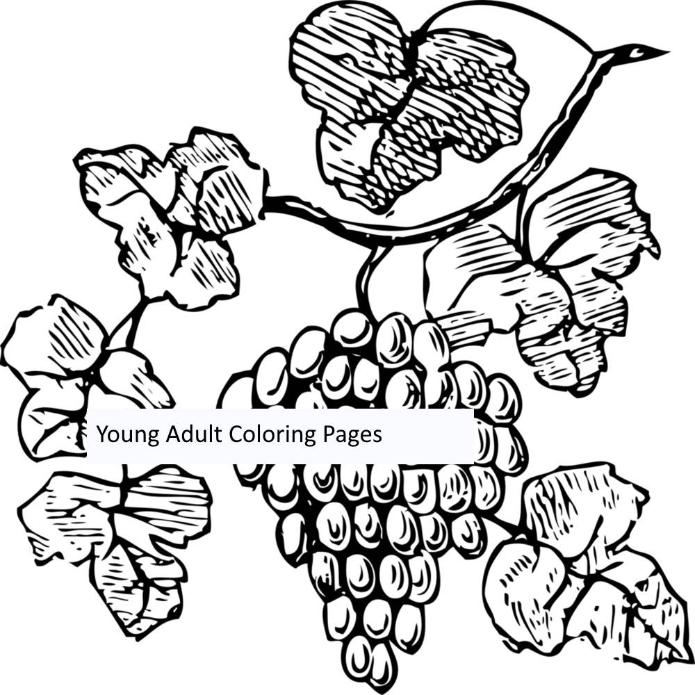 Plants Coloring Page Figure 10 Grape 1. Printable Coloring