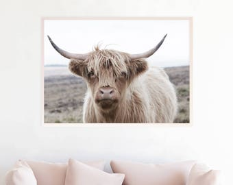 Highland Cow Print, Highland Cow Download, Highland Cow Photography Art, High Cow Printable Art, Highland Cow Photo Poster,  hc5cl