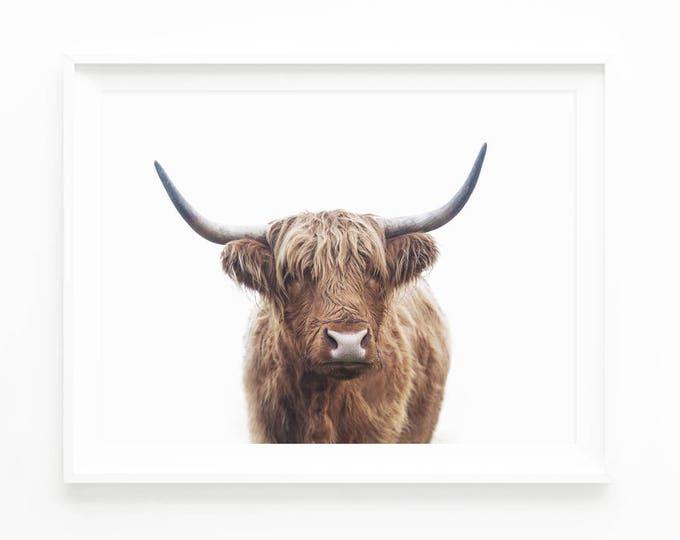 Highland Bull Print Highland Cow Printable Wall Art Etsy