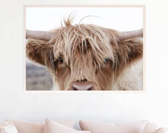 Highland Cow Photo Wall Art, Highland Cattle Print, Farmhouse Printable Decor Art, Highland Cow Photography Download, Rustic Decor, hc3zlc