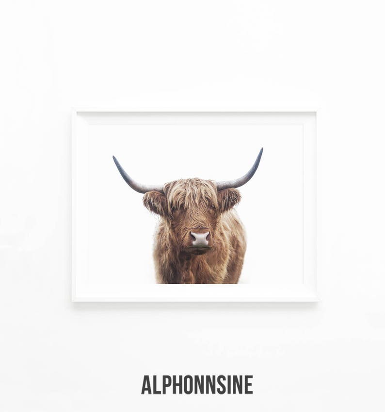 photograph relating to Printable Cow identified as Highland Bull Print, Highland Cow Printable Wall Artwork Pictures, Southwester Decor, Rustic Farm Decor, Printable Obtain Artwork Poster, hc2lc