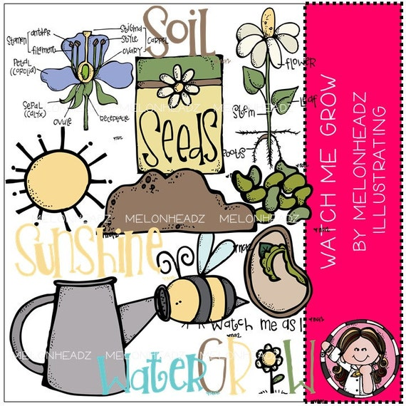 Plant Life Cycle clip art - Watch Me Grow