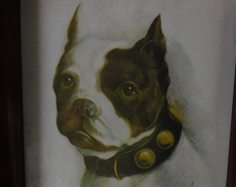 Vintage Boston Terrier Print by Von H framed - 1909 copyright - from DustyMillerAntiques