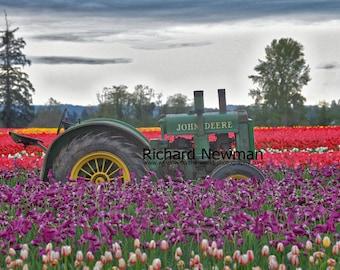 John Deere  tractor, bright tulips vivid color photograph