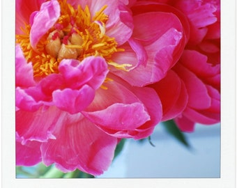 Vibrant Pink Peony Floral Photography - Bright Bedroom Print - Home Decor - Gift for Gardener - Gift for Her - Variety of Sizes - Wall Art