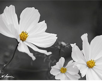 Flower wall decor PRINT, ACRYLIC or CANVAS gallery wrap Artwork Black and white yellow Home photo Living room Fine still life picture gift