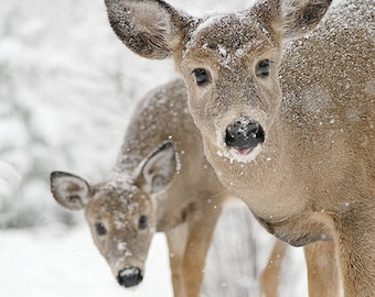 Christmas Card White-tailed Deer PRINT ACRYLIC or CANVAS Gallery Wrap Winter Landscape Photo Picture Canada Art Home Cottage Decor Wildlife