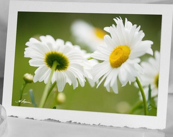 Daisies Photo Greeting CARD, Blank Notecards, Flower, White and Yellow Daisy, Fine high quality paper Also iPhone Samsung case, 4x6 picture