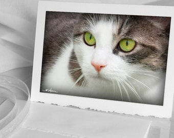 Kitty Cat the visitor, Photo Greeting CARD, Blank notecard photograph, Green eyes White gray Pet Ottawa Also as iPhone Samsung case mom dad