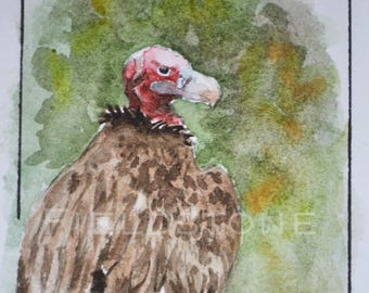 2.5 x 3.5 ACEO artist trading card miniature original wall art Lappet-faced vulture wildlife watercolour painting