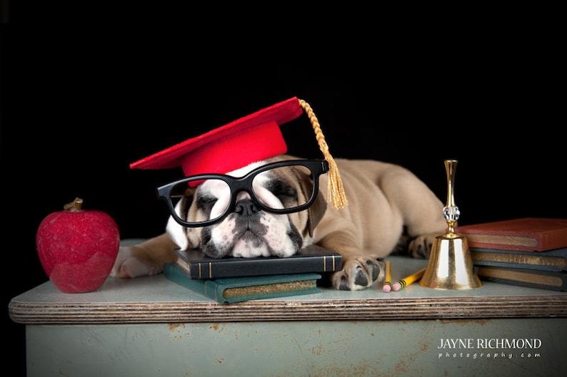 Dog Graduation Cap / Graduation Hat Costume image 0