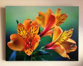 Alstroemeria print on Canvas