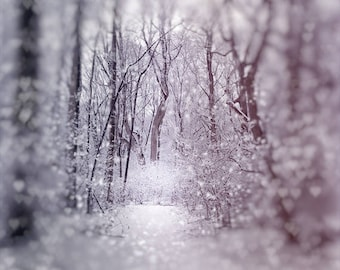 Snow Path, Winter Photograph, Bokeh, Nature, Trees, monochromatic, black and white