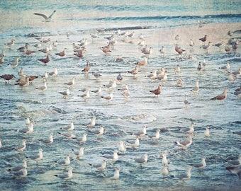 Sea Gull Photograph, Flock of Sea Gulls, Shore Decor, Coastal Art, Coastal Decor