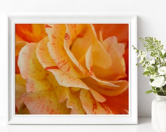Delicate Yellow and Orange Rose Photography Print Printable Instant Digital Download