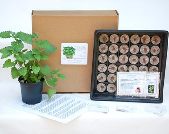 DIY Tea Herbs Garden Kit