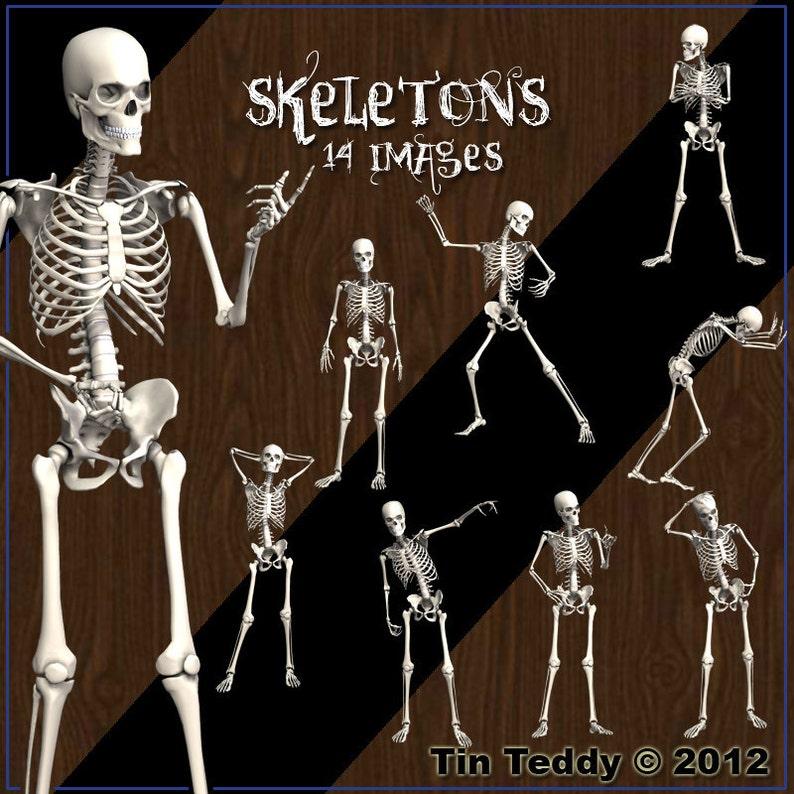 Skeletons Digital Clip Art  14 Boney Images for Scrapbooking image 0