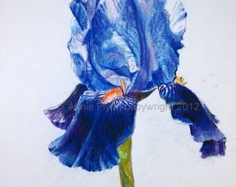 Iris in Blue Print