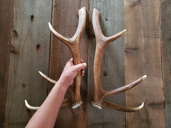 Stunning Elk Antler Handle Set Matched Door Pulls Refrigerator Tree House  Man Cave Gun Room Hunting Lodge Cabin Log Home Barn Doors