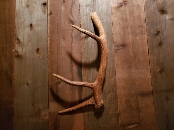 Real Elk Antler Drawer Handle Cabinet Pulls Door Hardware by Antler Artisans