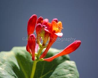 Mother Nature's Flower Macro Fine Art Print