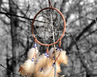 Forest Dream Catcher 11x14 print mounted in a 16x20 white double mat.