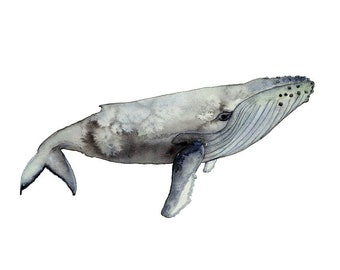 Humpback Whale Print, Whale Watercolour Wall Art, Coastal Interior Decor, A3 Australian Art