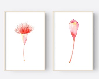 Gum Blossom Prints, Contemporary Australian Botanical Paintings, Watercolour Set of Two, Made in Australia Wall Art, Pair of Native Prints