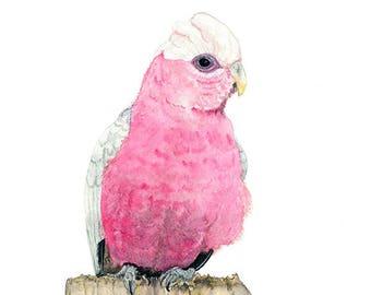 Galah Watercolour, Australian Native Bird Fine Art Print, A4 Bird Wall Art, Pink Parrot Painting
