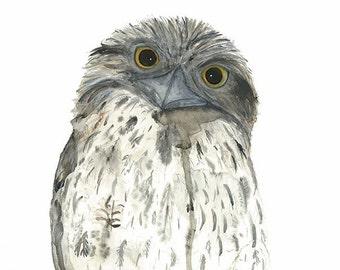 Tawny Frogmouth Print, Australian Native Bird Art, Australian Fauna Watercolour, Nature Wall Art