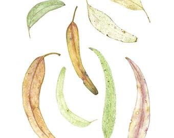 Gum Leaves print, Gum Leaf Wall Art, Australian Native Eucalyptus Illustration, Australiana watercolour painting, 5 x 7, 8 x 10, A4