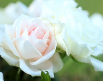 Rose Photography - Pale Pink and White Roses Photo Print - Flower Wall Art - Size 8x10, 5x7, or 4x6
