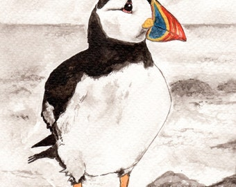 Puffin print - puffin art - high quality puffin gift -  Signed mounted Giclée Fine art print of Victor the Puffin - Alderney Gift