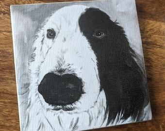 Collie Dog coaster - Canvas print and ceramic tile coaster featuring original artwork of Zak the Border Collie Dog