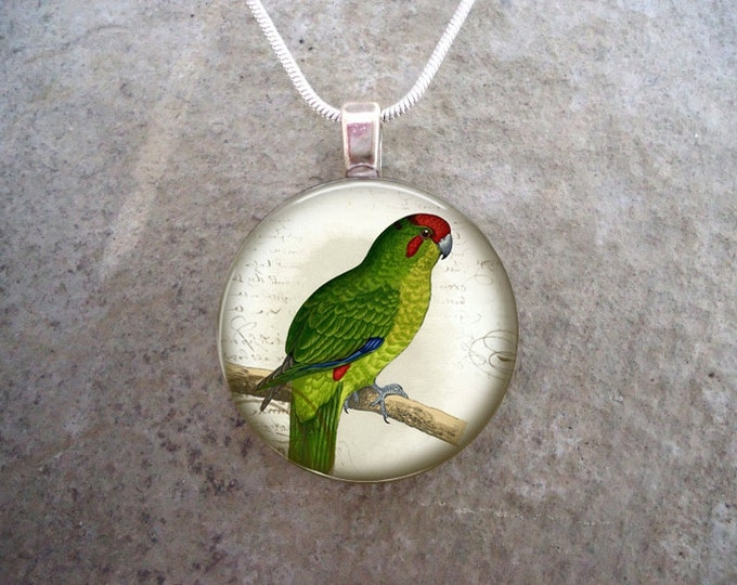 Parrot Jewelry - Glass Pendant Necklace - Free Shipping - Style BIRD35