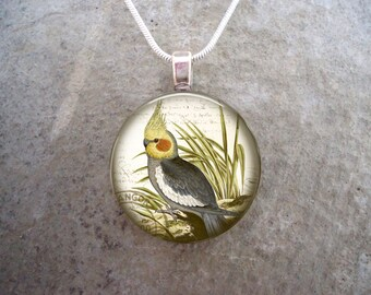 Cockatiel Jewelry - Glass Pendant Necklace - Victorian Bird 26
