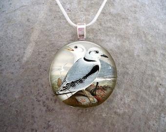 Bird Jewelry - Glass Pendant Necklace - Free Shipping - Style BIRD44
