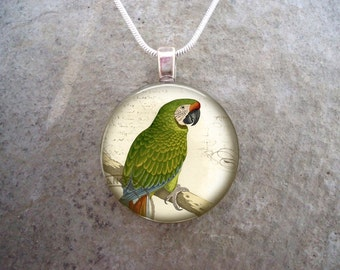 Military Macaw Victorian Illustration Parrot Jewelry - Glass Pendant Necklace -  - Free Shipping - sku BIRD24