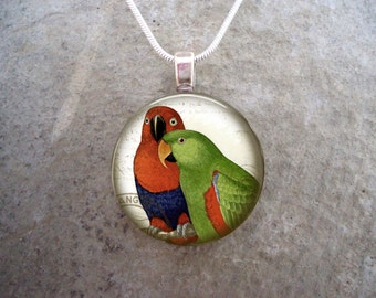 Eclectus Parrot Jewelry - Victorian Style Science and Nature Illustration - 1 Inch Glass Pendant Necklace - Free Shipping - style BIRD20