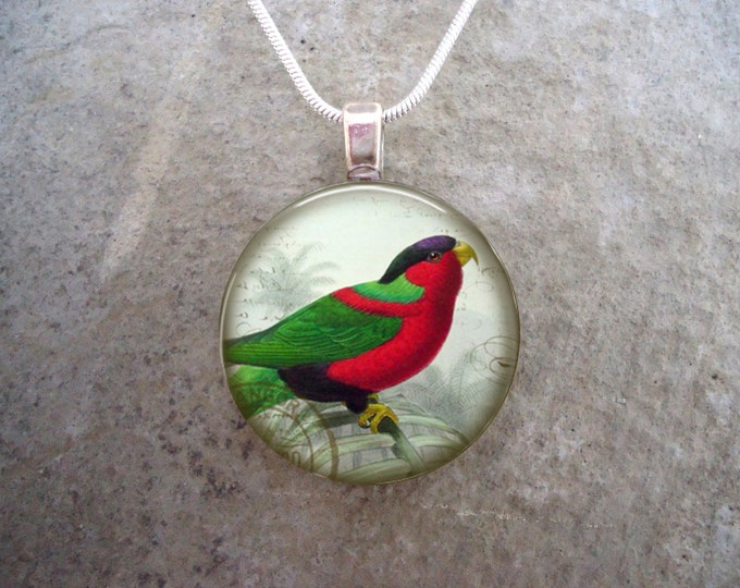 Parrot Jewelry - Glass Pendant Necklace - Free Shipping - Style BIRD38