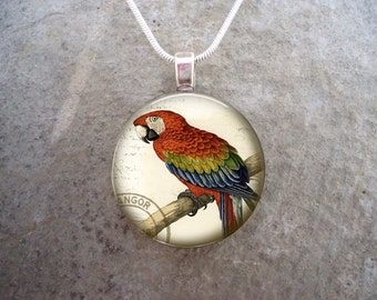Red and Blue Macaw - Victorian Illustration Parrot Jewelry - Glass Pendant Necklace - Free Shipping - Style BIRD23