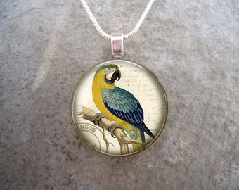 Attention-Getting Blue and Yellow Macaw Parrot Jewelry - 1 Inch Domed Glass Pendant Necklace, Key Chain, Zipper Pull - Style BIRD07